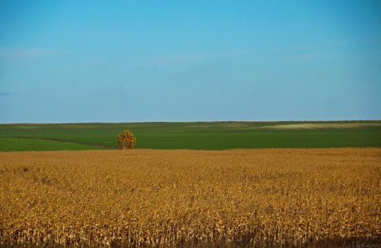 На Тернопільщині після оброблення полів масово потруїлися селяни