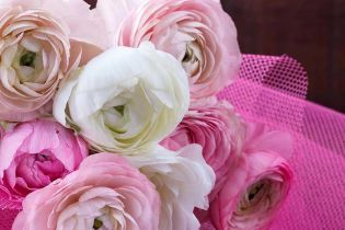 Розы по 50 и тюльпаны по 20: ТСН исследовала цветочный ажиотаж в Украине перед женским праздником