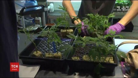 Каліфорнія стала найбільшим американським штатом, де легалізували марихуану