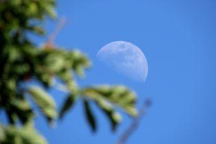 Первое растение на Луне: появилось видео уникального биологического эксперимента на спутнике Земли