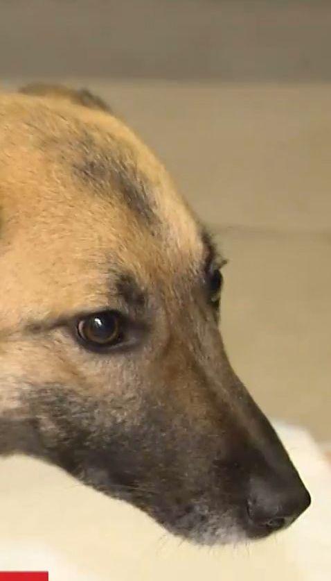 В лесу под Киевом спасли собаку с простреленной спиной