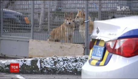 Во Львове копы взяли на службу двух собачек, которые являются символами Нового года