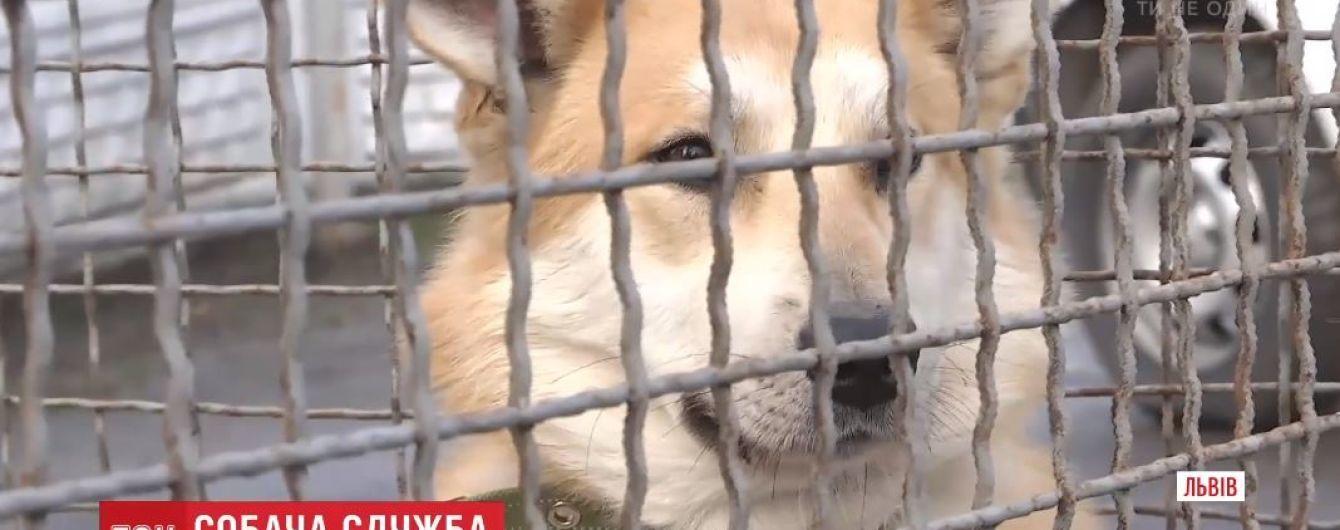 Во Львове полицейские приняли на службу двух бездомных псов