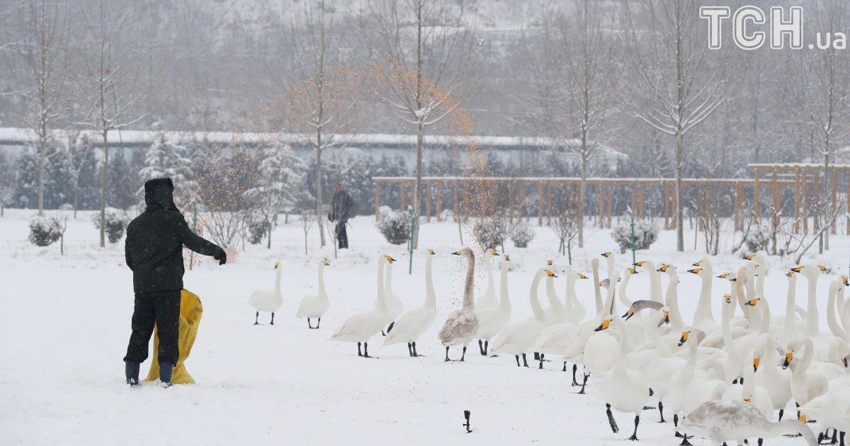 В Китае завьюжило: мощные снегопады разрушили две сотни домов, 10 человек погибли