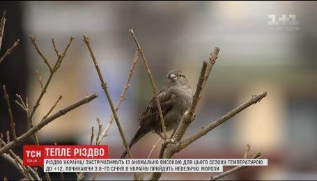 На українців чекає аномальне тепло на Святвечір та Різдво