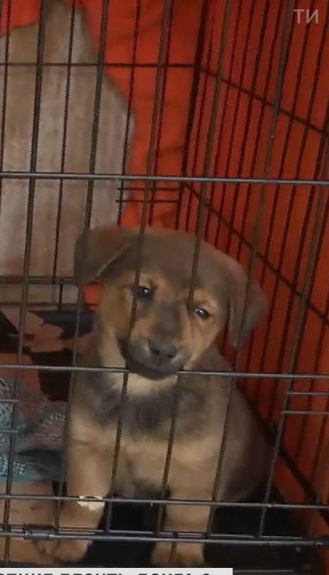 Українці стали більше забирати безпритульних тварин до себе до дому