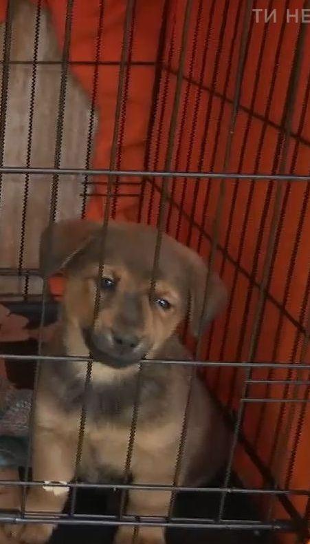 Украинцы стали больше забирать бездомных животных к себе домой