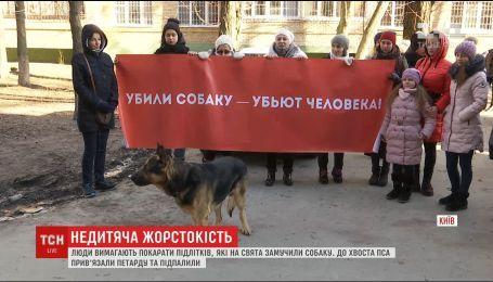 В Киеве подростки привязали петарду под хвост собаке и подожгли