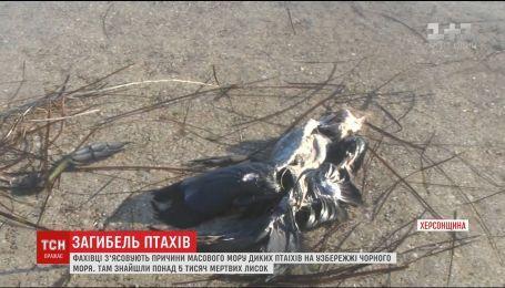 На Херсонщині зафіксували масовий мор диких птахів Чорного моря