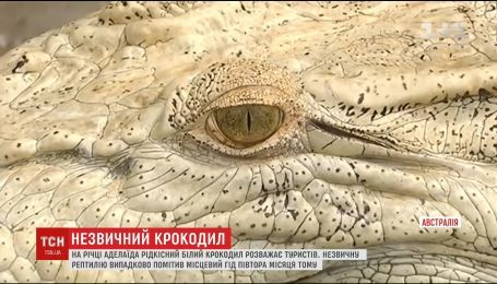 В Австралії туристів розважає рідкісний білий крокодил