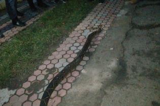 В Хусте прохожие посреди города наткнулись на экзотическую змею