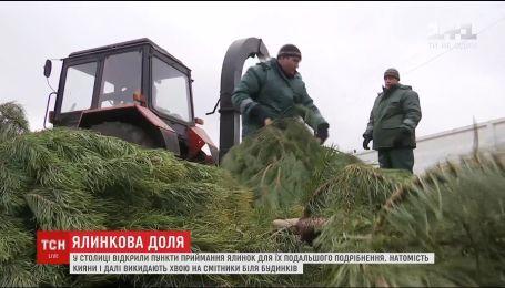 В Киеве открыли пункты приема живых елок для измельчения