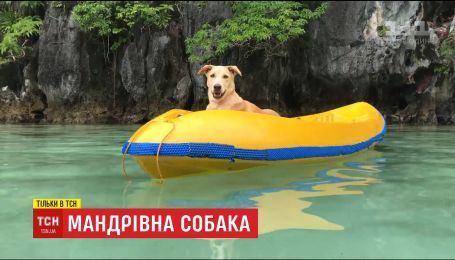 Песик облетів майже увесь світ та став популярним у Мережі після порятунку від смерті парою українців
