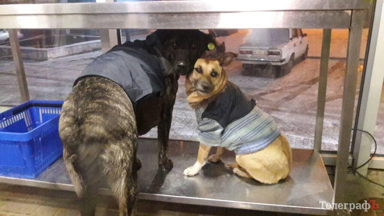 Безпритульні собаки у светрах Кременчук