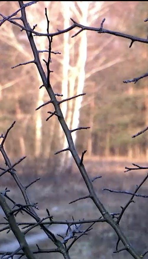 На Волыни 200 гектаров земли с залежами янтаря оказались в собственности одной фирмы