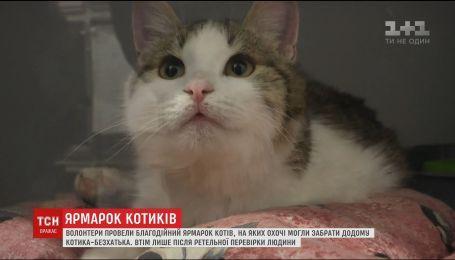 У столиці волонтери влаштували кото-ярмарок