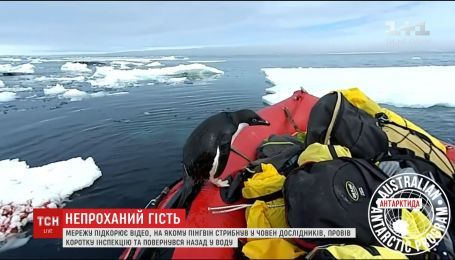 Интернет покоряет видео, на котором пингвин прыгнул в лодку исследователей