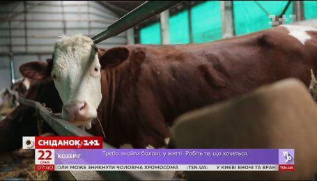 Мой путеводитель. Винницкая область - ферма с израильскими технологиями и сыр халуми