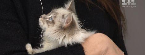 Работа мечты: ветклиника в Черкассах приглашает обіймача котов