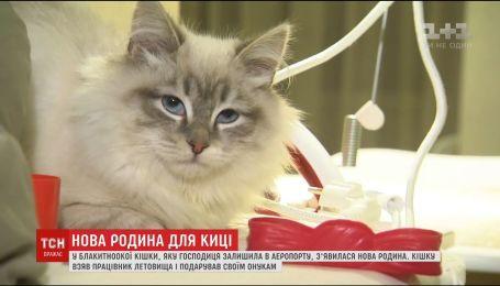 Брошенная в аэропорту кошка обживается в новом доме