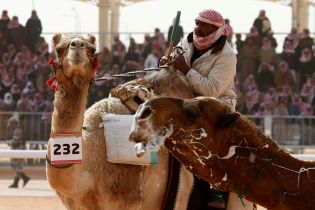 В Саудовской Аравии на верблюжем конкурсе красоты участников дисквалифицировали за инъекции ботокса