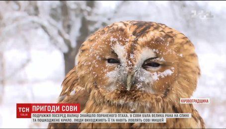 На Кіровоградщині поранена сова прилетіла в село до людей по допомогу
