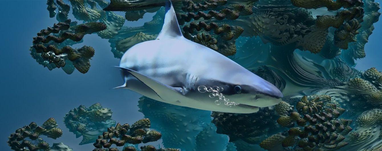 В США отдыхающий вступил в поединок с акулой и выжил в нем