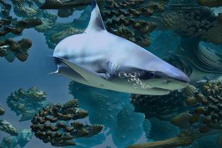 У США відпочивальник вступив у двобій з акулою та вижив у ньому
