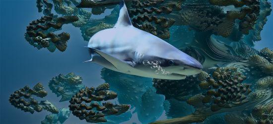 В Австралії акула на очах у десятків туристів атакувала чоловіка. Він загинув