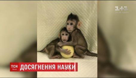 Китайские ученые первыми клонировали обезьян