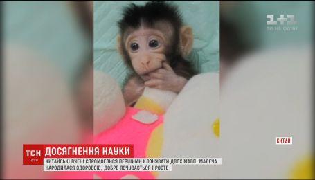 Ученые впервые смогли успешно клонировать примата