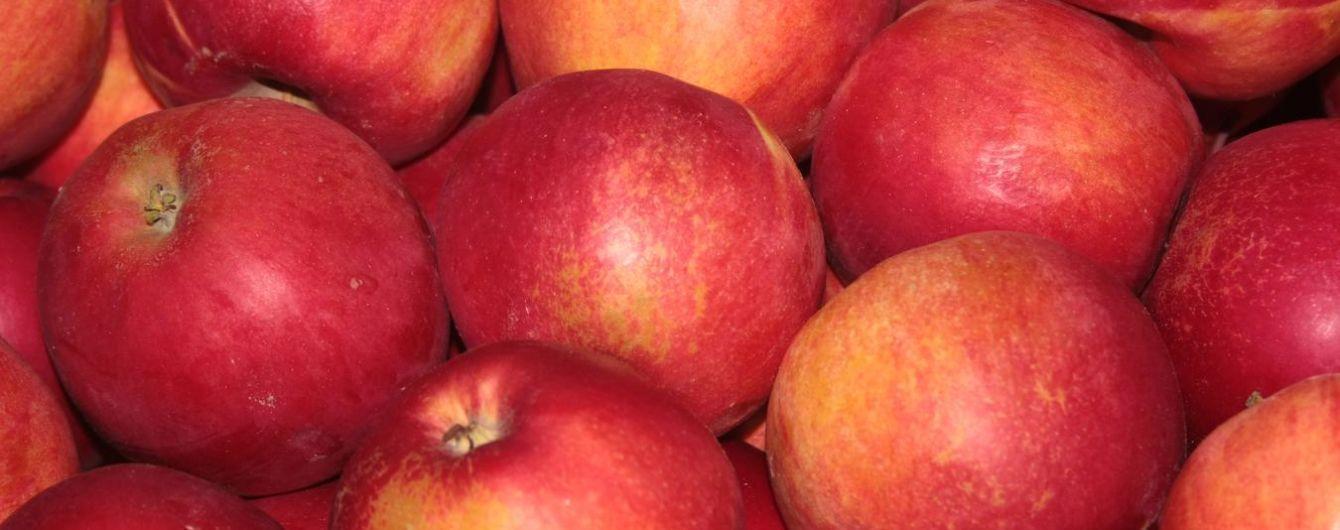 Экспорт украинских яблок вырос больше, чем втрое