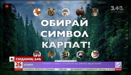 Выбери свой символ Карпат: как спасают леса неравнодушные украинцы