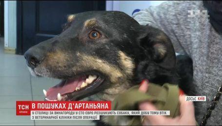 Из столичной ветклиники сбежал пес, на лечение которого собирали всем миром