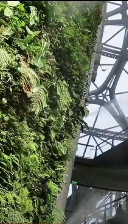 Интернет-компания Amazon открыла необычный лесной офис