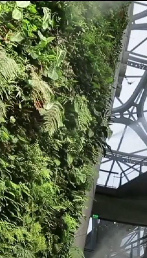 Інтернет-компанія Amazon відкрила незвичайний лісовий офіс