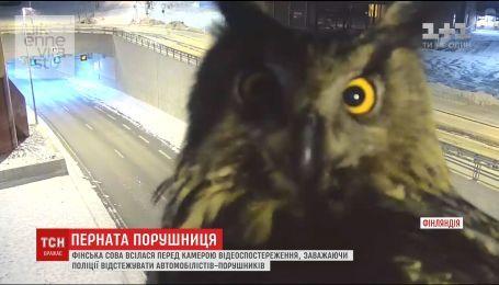 В Финляндии сова мешала работе полиции, усевшись перед камерой наблюдения