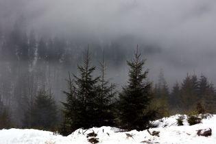 Погода на понеділок: Україну накрив туман, тримається плюсова температура