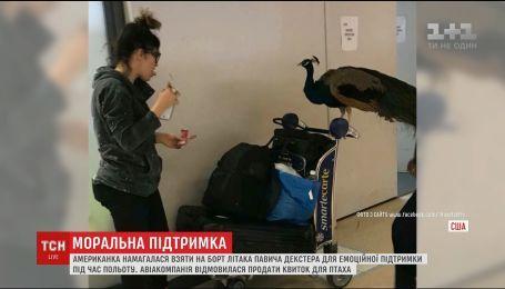 В США американка пыталась сесть на борт самолета с павлином