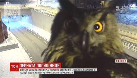 У Фінляндії сова заважала поліції викривати порушників правил дорожнього руху