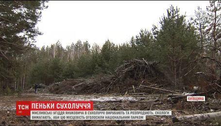 Охотничьи угодья Януковича в Сухолучье массово вырубают и распродают