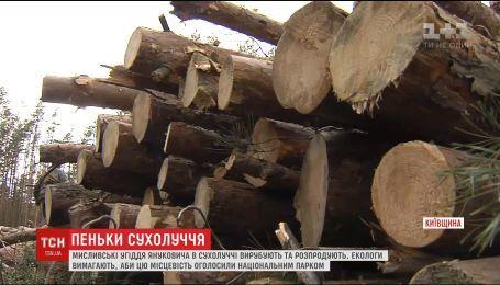 Знамениті угіддя Януковича вирубують та розпродують