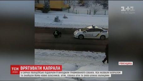 Мережу підкорило відео, як на Рівненщині копи рятують травмованого собаку