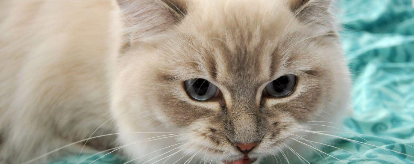 Вчені встановили ще одну користь від домашніх тварин