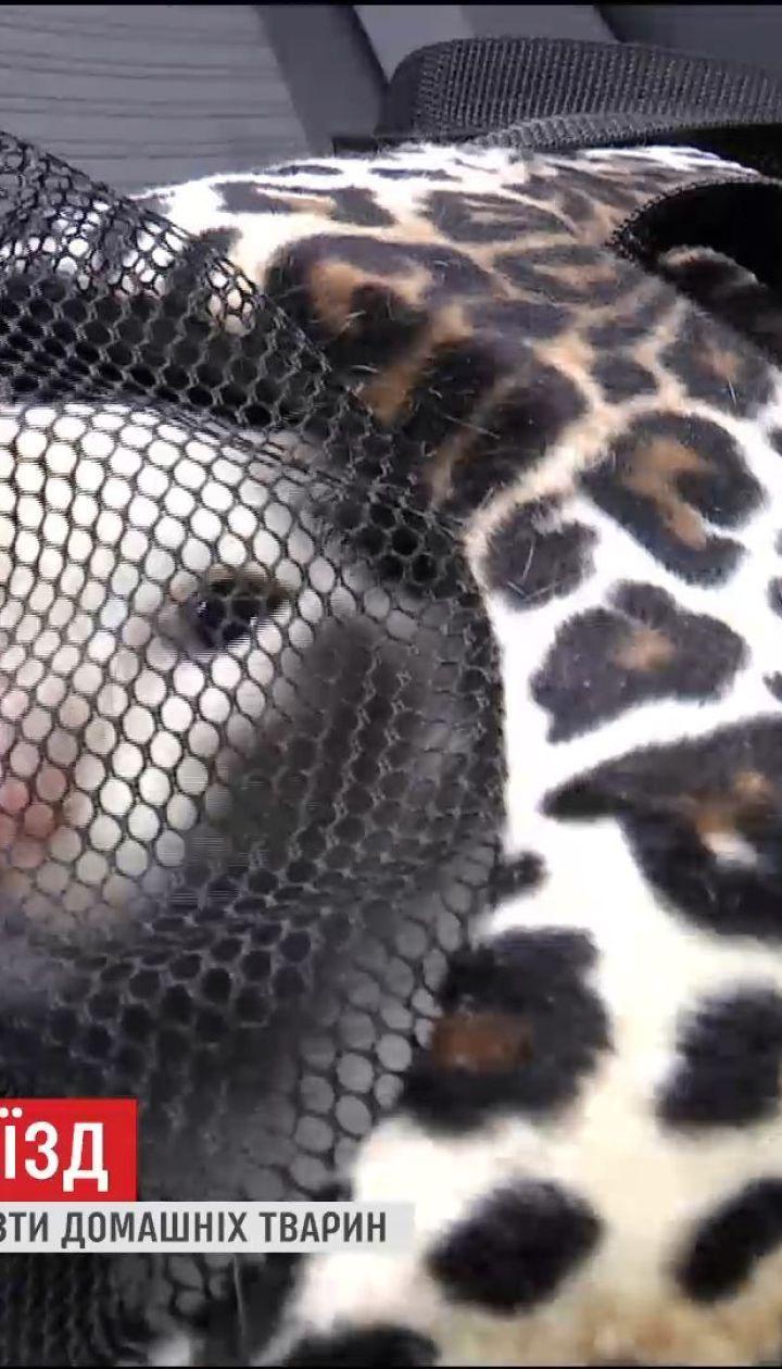 Подорож з улюбленцем: як перевозити домашніх тварин через кордон