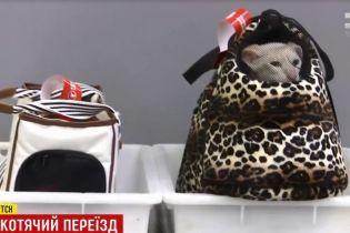 """Паспорти на котів і """"сюрпризи"""" на зважуванні: що варто знати українцям, які вилітають за кордон із пухнастими улюбленцями"""