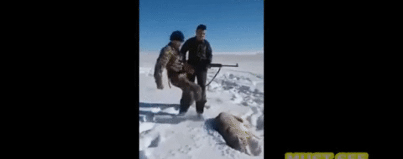 В Сети появилось видео, на котором застреленный волк прикинулся мертвым и напал на охотника