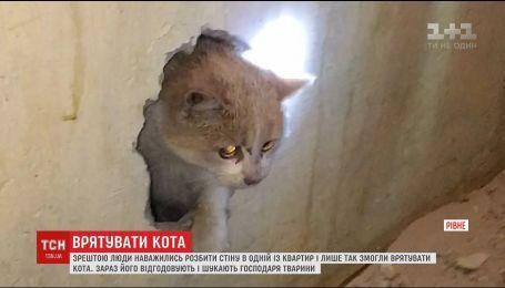 В Ровно ради спасения котика пробили стену в квартире