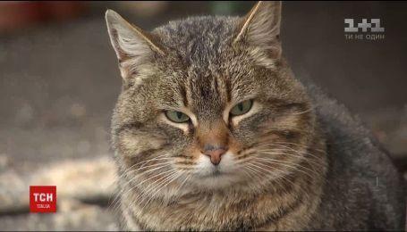 На Днепропетровщине котов признали частью экосистемы города