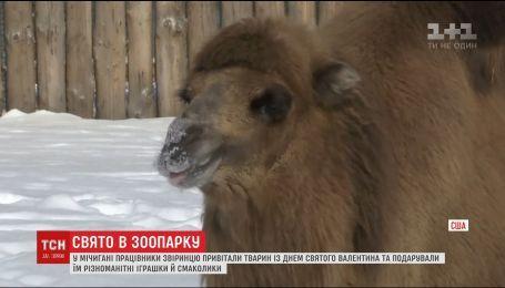 В США в зоопарке для животных устроили День святого Валентина